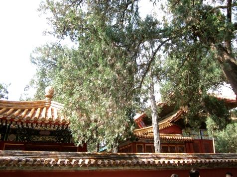 china-chine-forbidden-city-cite-interdite-pekin-beijing-travel-blogger-19