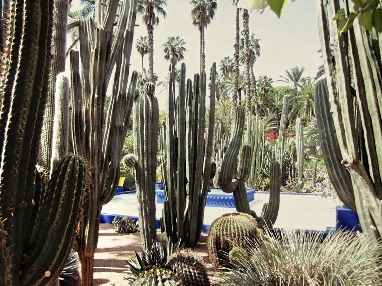 Marrakech-Photo-Diary-Journal-Belgian-Fashion-Travel-Blogger-Yves-Saint-Laurent-Maroc-Morocco-jardin-majorelle-garden-cactus.jpg