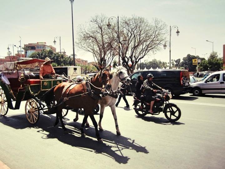 Marrakech-Photo-Diary-Journal-Belgian-Fashion-Travel-Blogger-Yves-Saint-Laurent-Maroc-Morocco-Jardin-Majorelle-Garden-contraste-contrast-horses-calèche.jpg