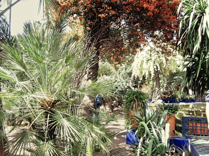 Marrakech-Photo-Diary-Journal-Belgian-Fashion-Travel-Blogger-Yves-Saint-Laurent-Maroc-Morocco-Jardin-Majorelle-Garden-nature-cactus-palmiers-palm-trees.jpg