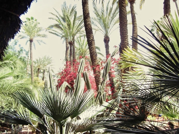 Marrakech-Photo-Diary-Journal-Belgian-Fashion-Travel-Blogger-Yves-Saint-Laurent-Maroc-Morocco-Jardin-Majorelle-Garden-palmier-palm-street-red.jpg
