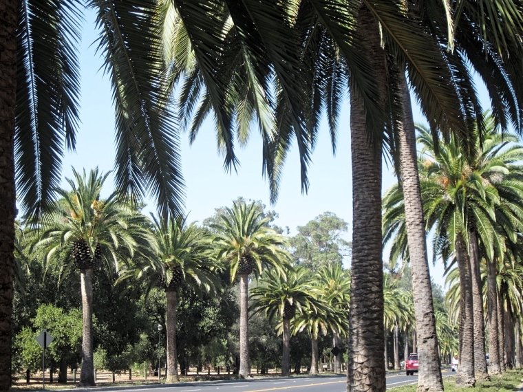 palo-alto-stanford-university-california-san-francisco-photo-diary-usa-ivy-league-avenue-palmtrees.jpg