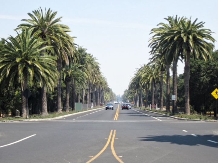 palo-alto-stanford-university-california-san-francisco-photo-diary-usa-ivy-league-university-avenue.jpg